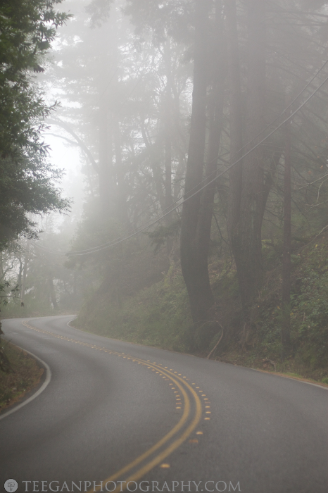 Big-Basin-fog  001