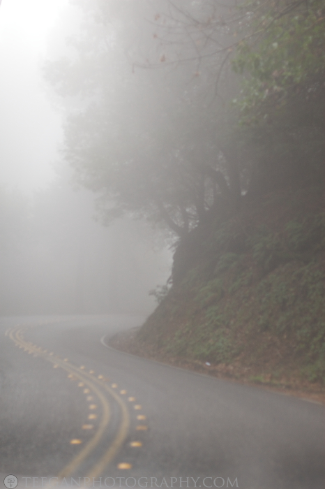 Big-Basin-fog  002