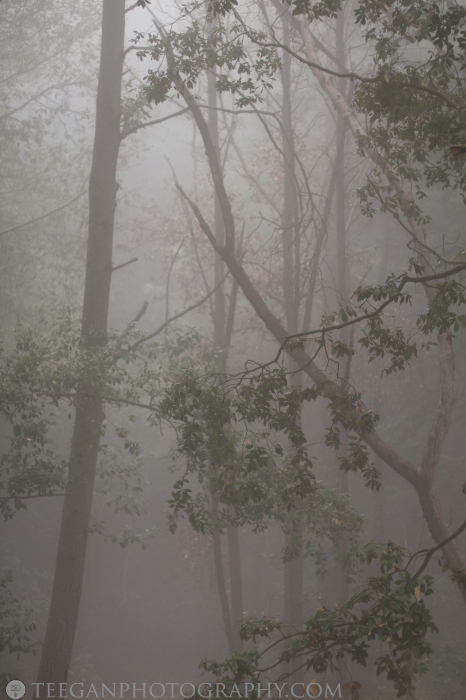 Big-Basin-fog  003