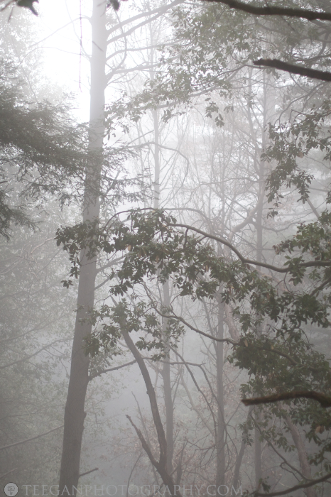 Big-Basin-fog  004