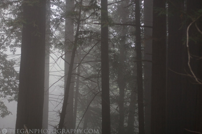 Big-Basin-fog  006
