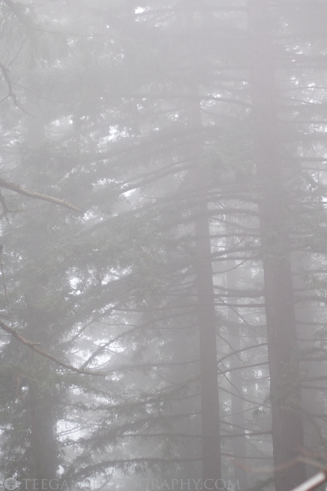 Big-Basin-fog  007
