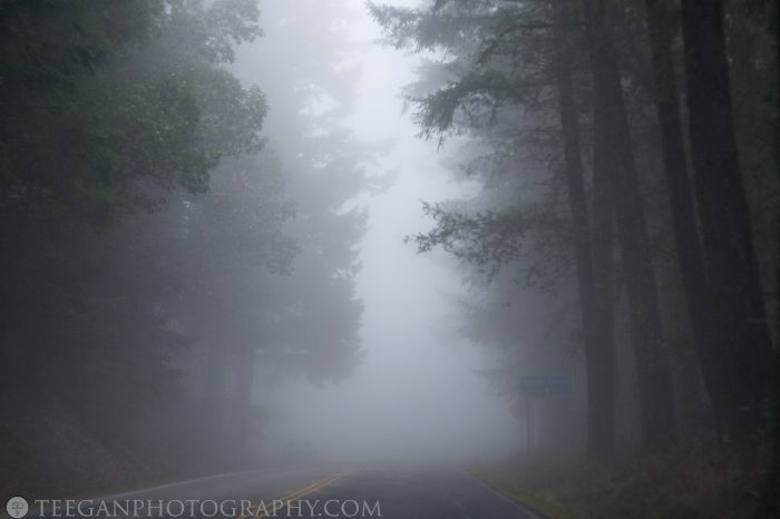 Big-Basin-fog  009
