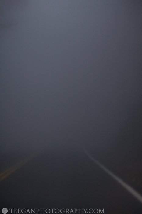 Big-Basin-fog  010