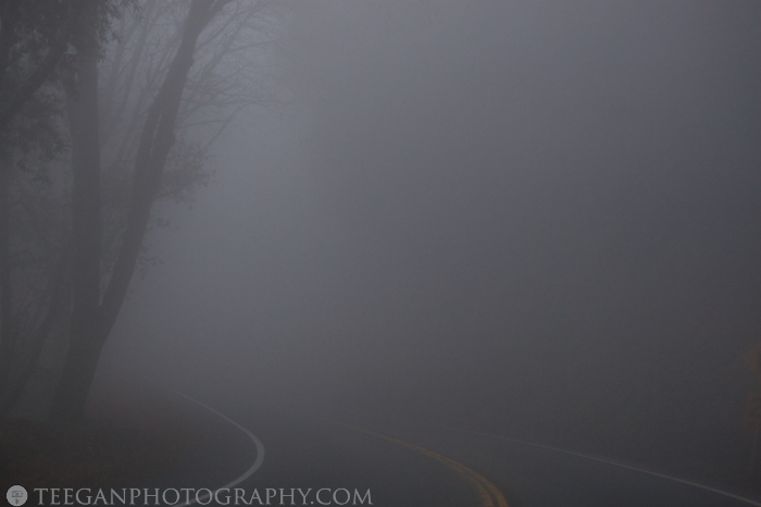 Big-Basin-fog  011