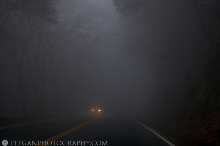 Big-Basin-fog  012