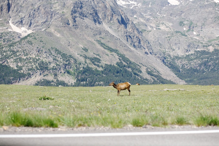 trail ridge road tundra elk