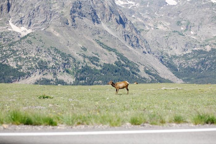 trail ridge road tundra elk
